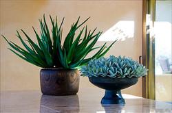 Kessler Plants