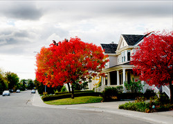 Davis Fall Color