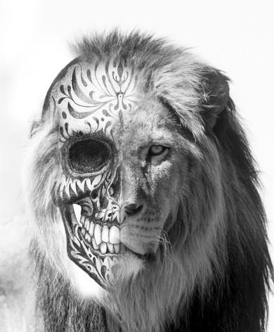 lion skull.jpg