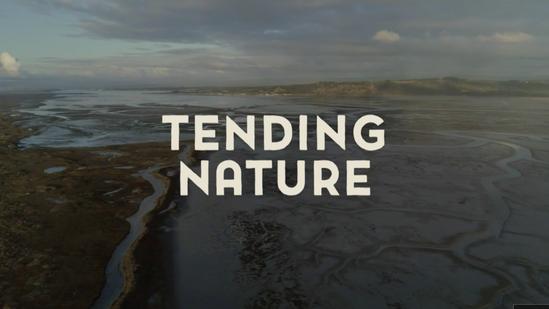 Tending Nature