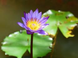 Bali - flower