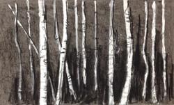 Beyond the Birch 9
