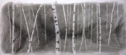 Beyond the Birch 11