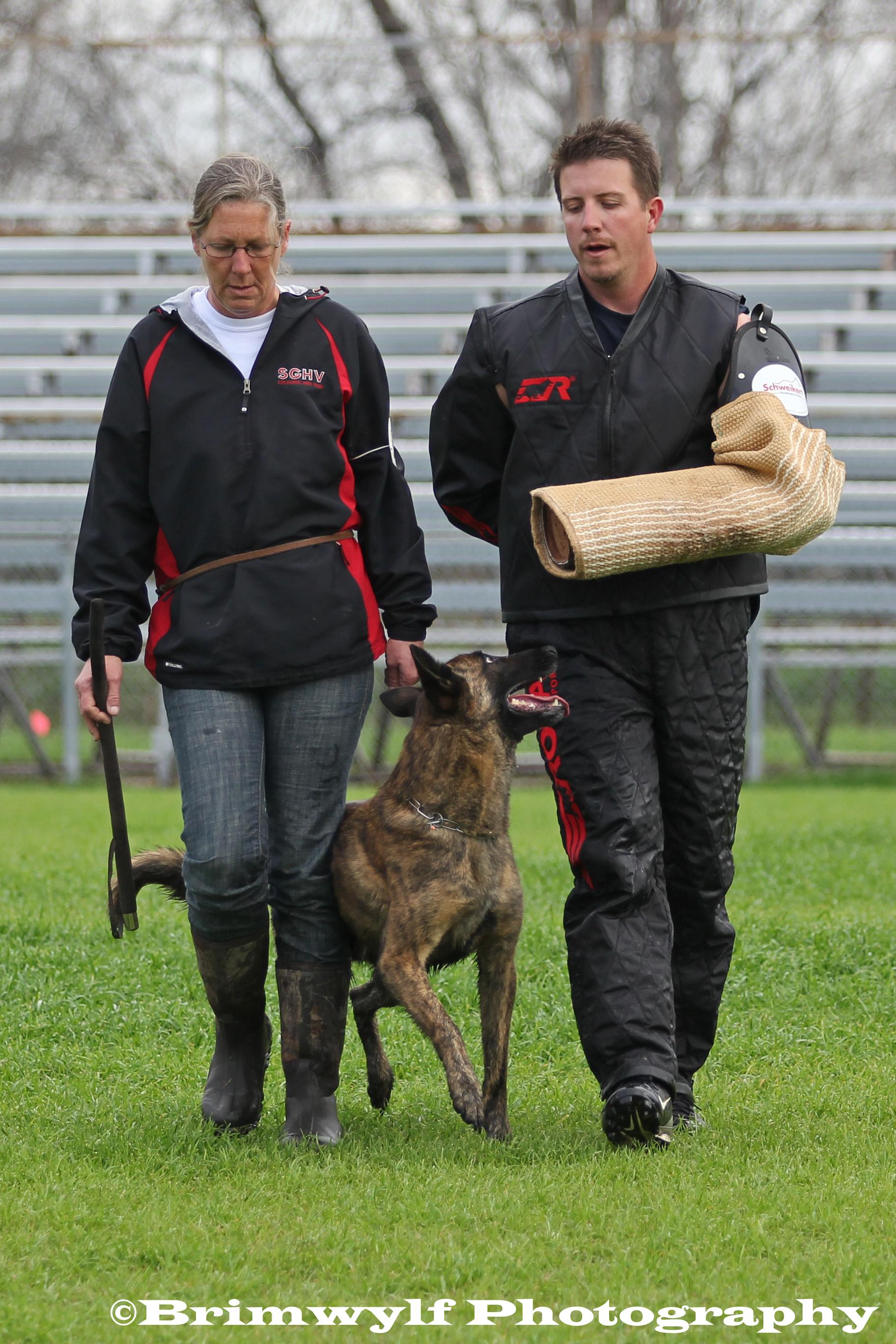 Dog Obedience Training Dc