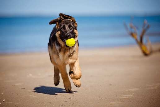 Beach-Games-for-Dogs.png