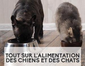 Tout sur l'alimentation des chiens et des chats