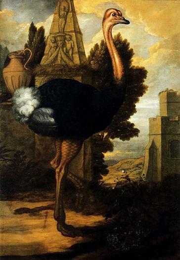 an_ostrich-large.jpg