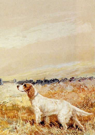 two_setters_in_a_field-large_edited.jpg