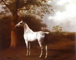 White Horse in Pasture