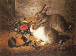 Escaped: Two Rabbits and a Guinea Pi