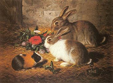 escaped__two_rabbits_and_a_guinea_pig-la