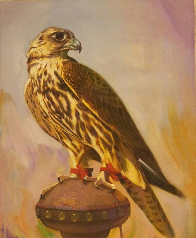 Arabian Hawk
