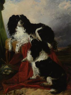 King Charles Spaniels