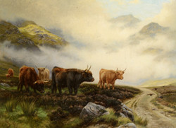 Highland Cattle in a Pass
