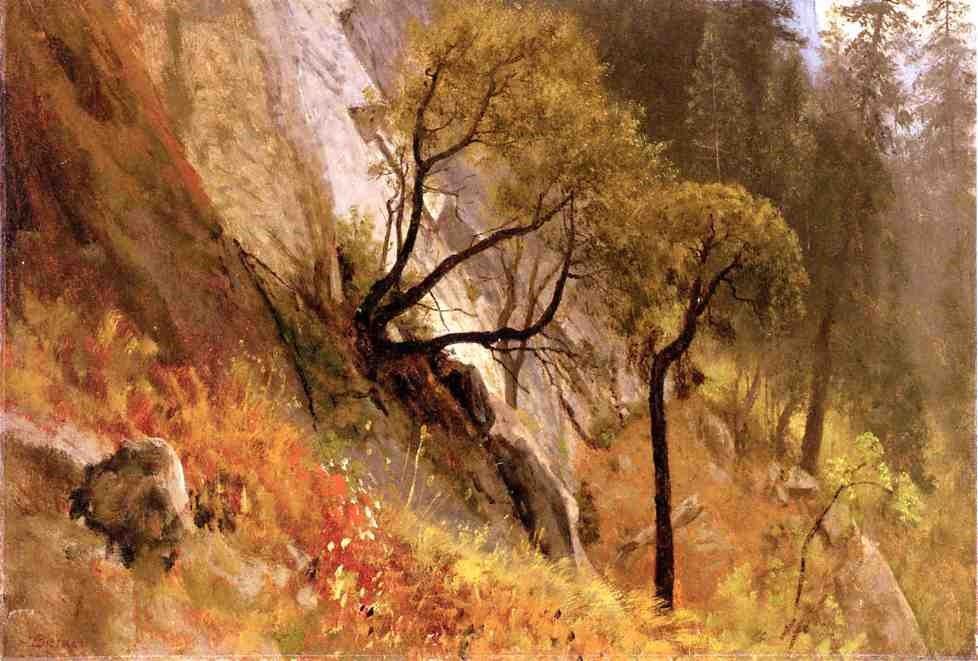 Landscape Study: Yosemite, Californi