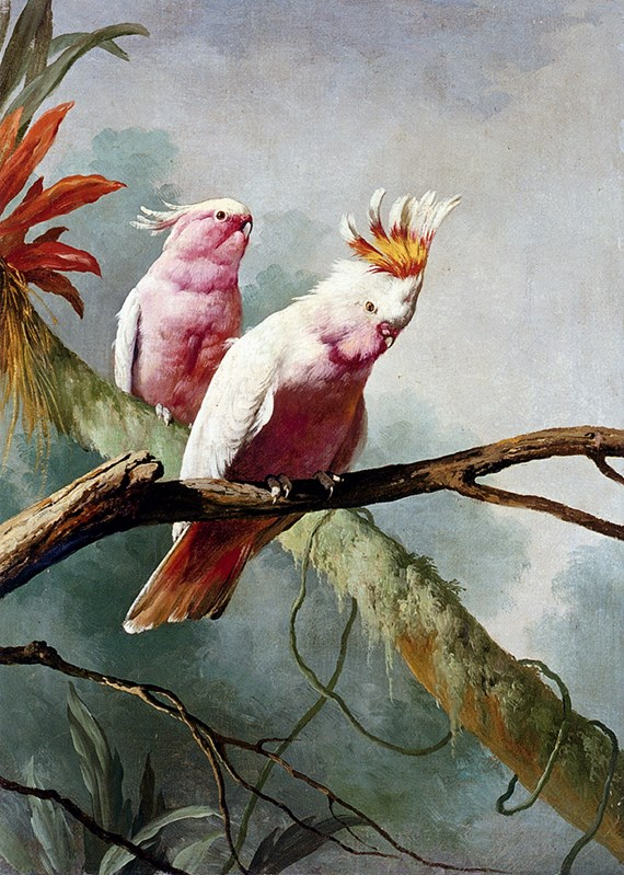 A Pair Of Leadbeaters Cockatoos