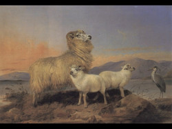 A Ewe with Lambs and a Heron Beside
