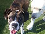 dog day care and boarding leavenworth kansas