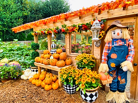 Issaquah pumpkin patch, best pumpkin patch Seattle, pumpkin patch washington, Fox Hollow Fall Festival