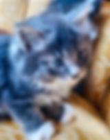 kitten.HEIC