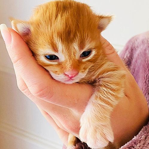 Kitten Deposit