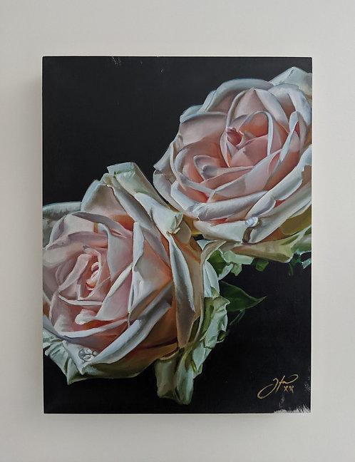 'XV' Rose Series