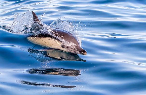 Dophin Shark Whale spotting tour