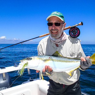fly fishing yellowtail