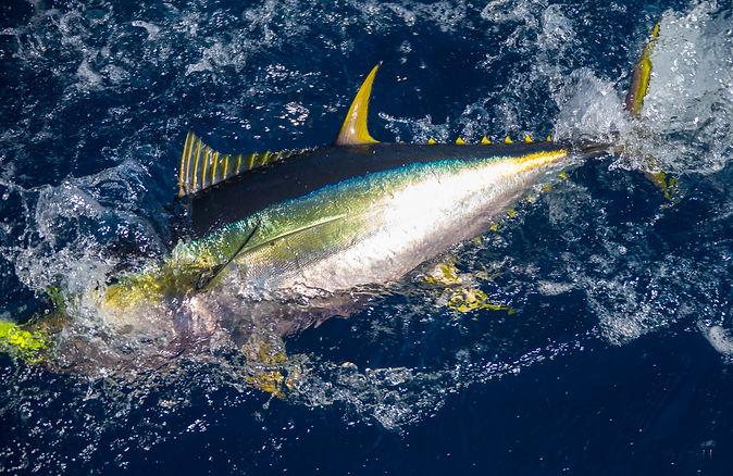 Tuna Charter Cape Town