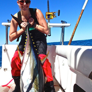 hout bay charter