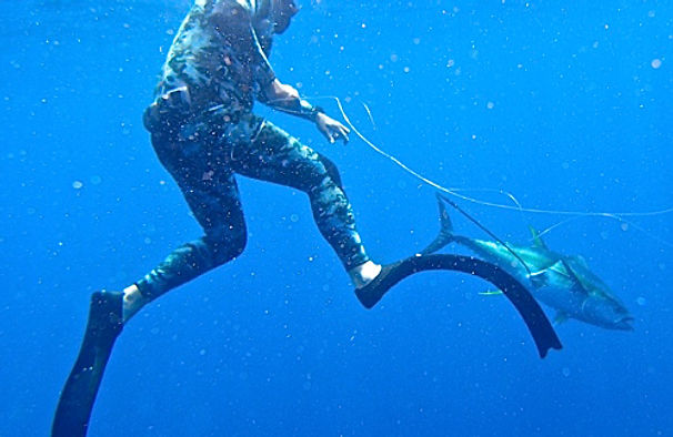 Spear fishing Charter Cape Town