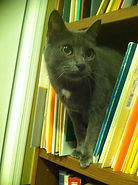 Cat, Kitty, Music, Library, Carray Music