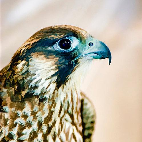 Falcon 1670