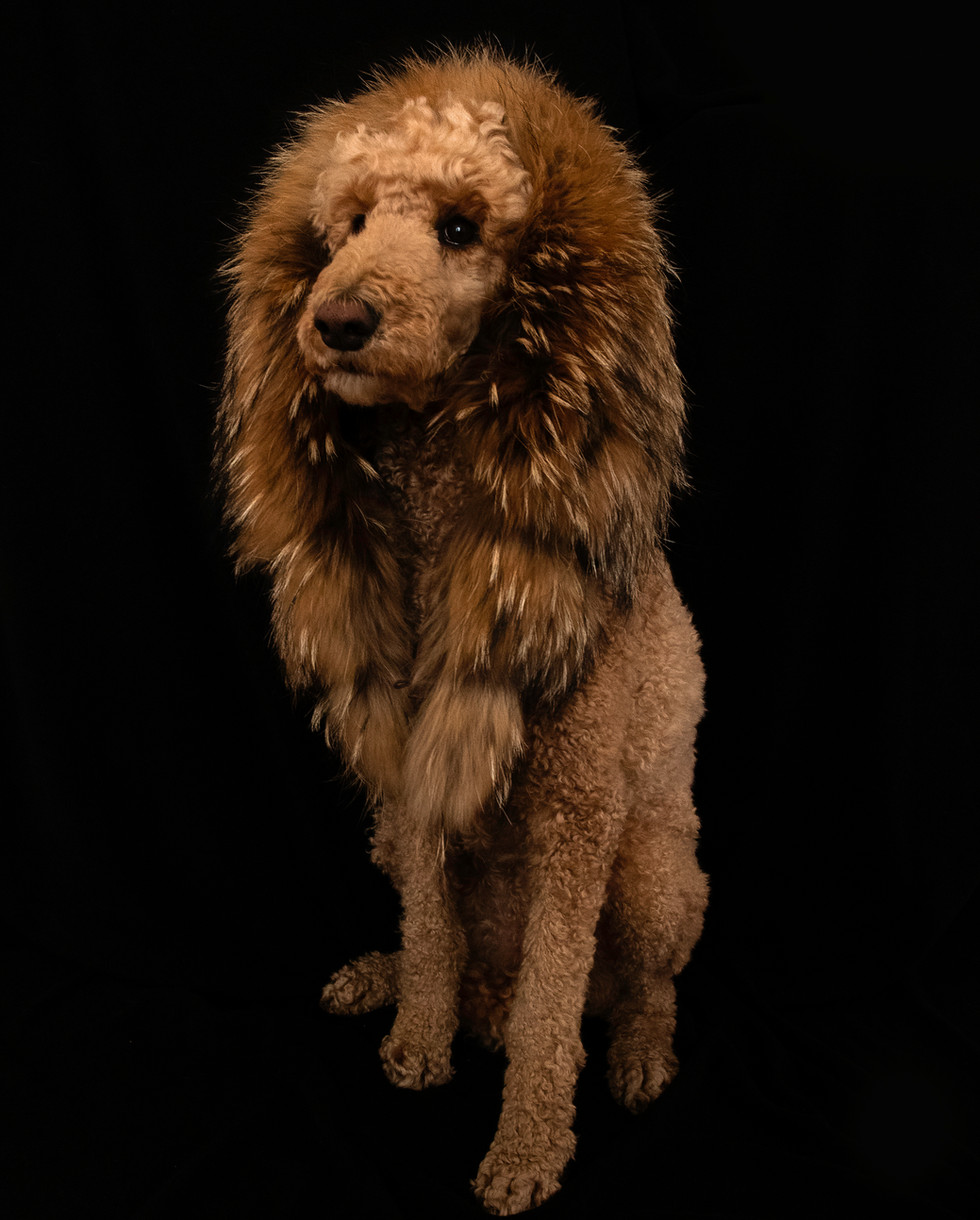 I'm a lion.
