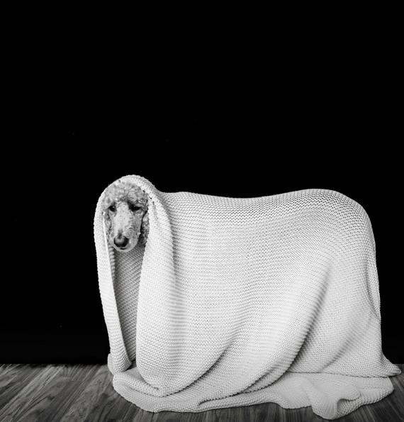 I'm a sheep.