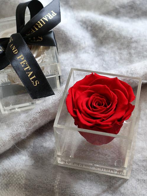 1 Rose Clara