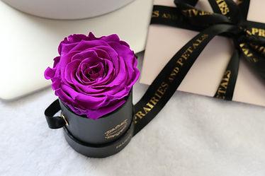 one year roses.jpg