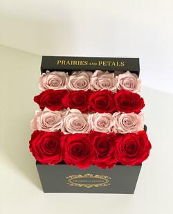 Horizontal (2 Rose Colours)