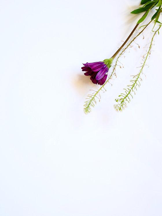 bloom-blooming-blossom-1172849.jpg