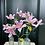 Thumbnail: Pink Paper Clematis