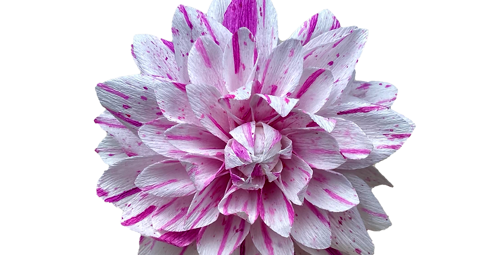 Multi-Coloured  Paper Dahlia