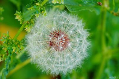 galini-samothraki.com.jpg