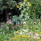 bunt gemischter Garten