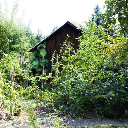 umwachsenes Gartenhaus