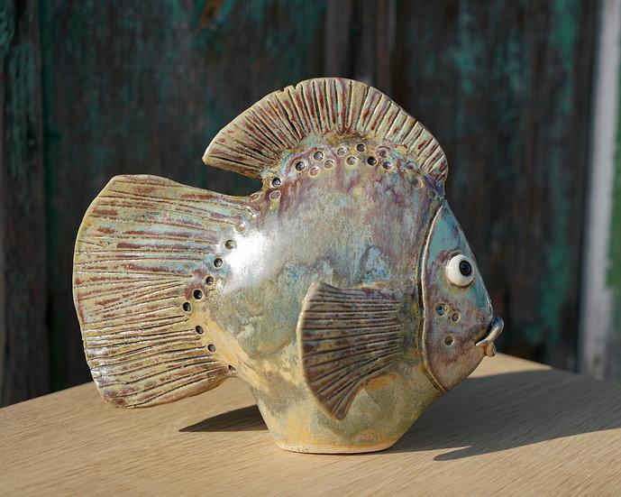 kleiner Flach-Fisch mit Rundflosse