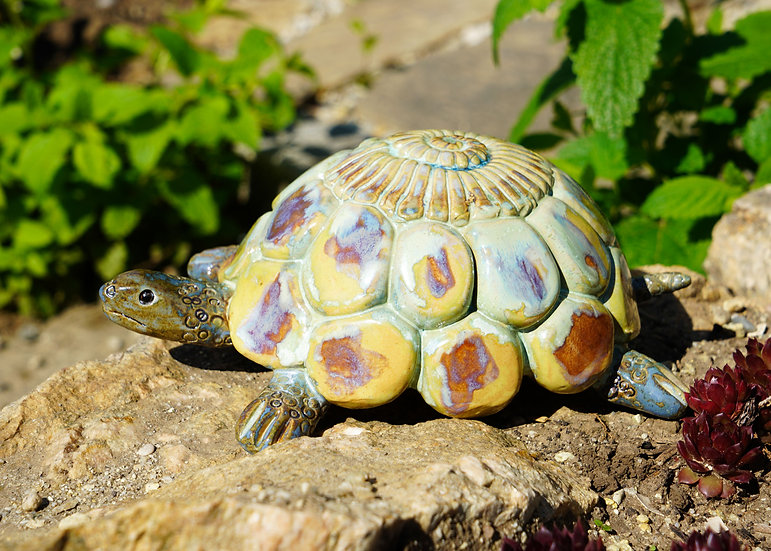 Schildkröte 'Woopa'