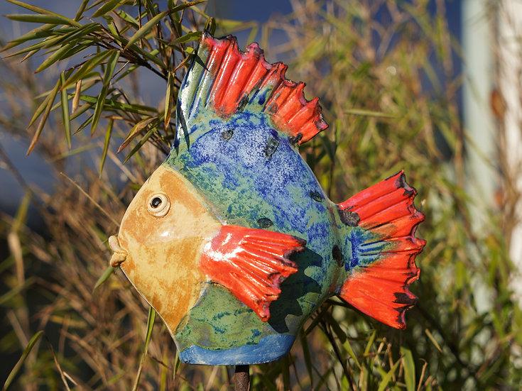 kleiner Flach-Fisch 'Plum'