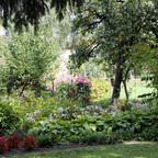 Hostas und Obstbäume