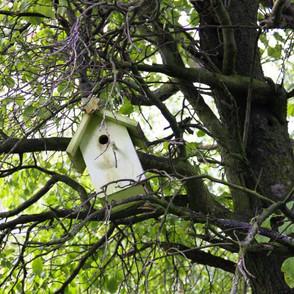 Vogelhäuschen im Baum