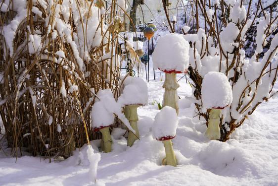 Pilze im Schnee